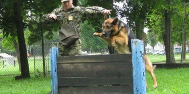 Одржано такмичење војних водича службених паса