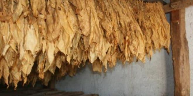 Домаће дуванџије траже заштиту од увозника