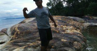 Мистериозно чудовиште запрепастило Индонежане (фото, видео) 4