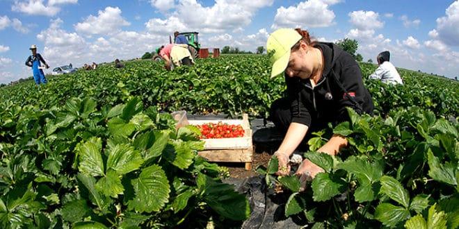 Ко предаје/продаје српско тржиште хране ВРЕДНО ПРЕКО 5 МИЛИЈАРДИ ДОЛАРА?
