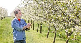Ово су радови које треба изводити у време цветања воћака 6
