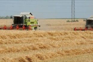 Иако се смањују субвенције и сви јој раде о глави од српске пољопривреде стиже 3,2 милијарде $