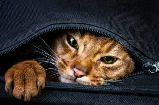 """Пазите шта купујете, чека """"мачка у џаку"""""""