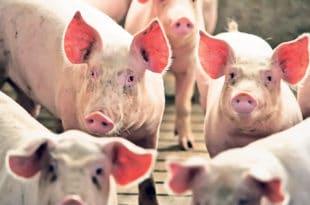 Шпекуланти криви за високу цену меса а не идиотска економска политика владе