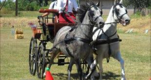 Коњске запреге кроз чуњеве