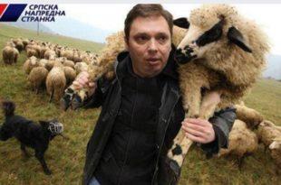 ХИТ ДАНА: Стојадинка (СНС) овце шиша! (видео) 8