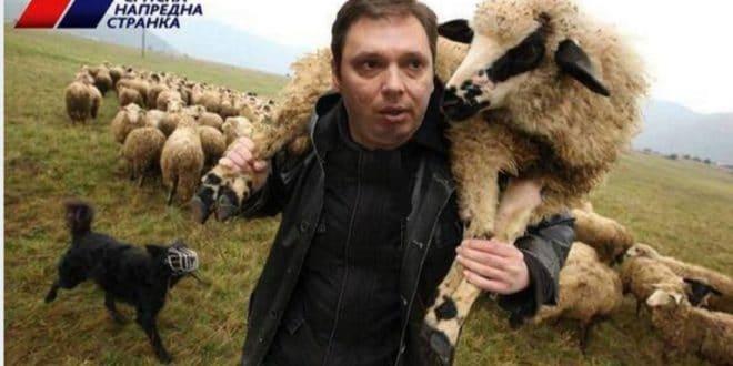 ХИТ ДАНА: Стојадинка (СНС) овце шиша! (видео) 1