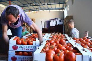 Купујемо прскани албански парадајз, неквалитетне бугарске јабуке и грчке нектарине, а домаће воће и поврће ПРОПАДА