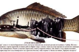 Дунавске але и санџаме 10