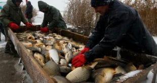 Риболовци упозоравају: Драстично смањен рибљи фонд у Србији 10