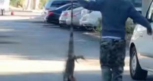 На Флориди је толико хладно да игуане падају са дрвећа (видео) 5