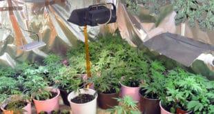 """ВЕЛИКОИЗДАЈНИЧЕ, чија је марихуана заплењена на пољопривредном добру """"Гаково""""? 10"""
