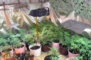 """ВЕЛИКОИЗДАЈНИЧЕ, чија је марихуана заплењена на пољопривредном добру """"Гаково""""? 1"""