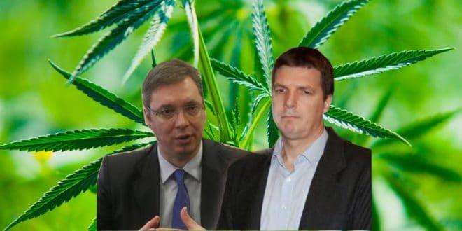Јовањица није прва плантажа марихуане напредњачког нарко картела, Гаково су сви заборавили (видео)