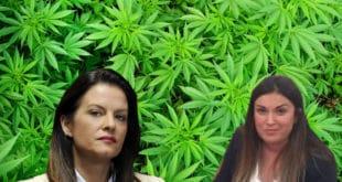 Вучићева министарка Марија Обрадовић потврдила да је сувласник имања са марихуаном