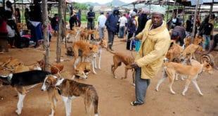 ИТАЛИЈА У ШОКУ! Мигранти роштиљају псеће месо у прихватним центрима