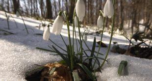 Данас почиње пролеће