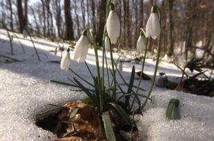 Данас почиње пролеће 11
