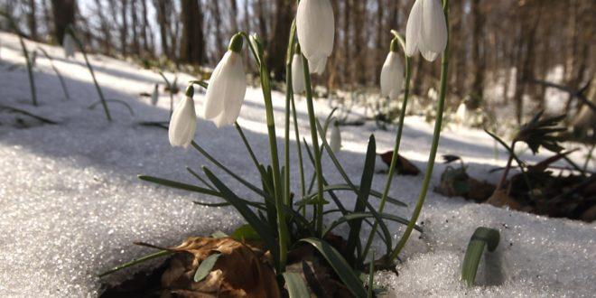 Данас почиње пролеће 1