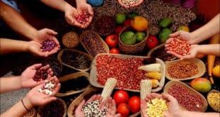 КОЛУМБИЈА: Сељаци добили битку – неће имати ГМО семе у својој провинцији Nariño (видео) 8