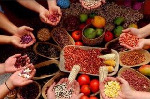 КОЛУМБИЈА: Сељаци добили битку – неће имати ГМО семе у својој провинцији Nariño (видео)