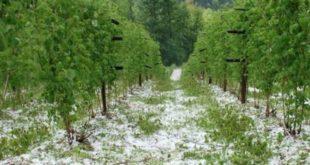 СРБИЈА БЕЗ ПРОТИВГРАДНИХ РАКЕТА! Град уништио стотине плантажа воћа и поврћа! 3