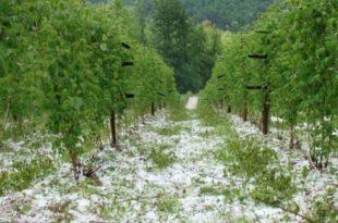 СРБИЈА БЕЗ ПРОТИВГРАДНИХ РАКЕТА! Град уништио стотине плантажа воћа и поврћа!