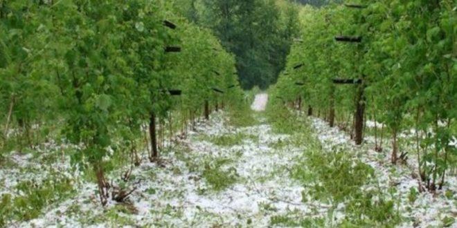 СРБИЈА БЕЗ ПРОТИВГРАДНИХ РАКЕТА! Град уништио стотине плантажа воћа и поврћа! 1