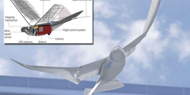 Шпијунски голубови - Кина покренула програм птица-дронова 1