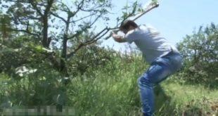 Због ниске откупне цене вишње крче се вишњици (видео) 10