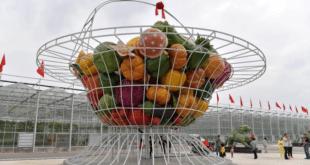 Нови велики пројекат Кинеза у Србији могао би да реши и муку малинара, воћара и повртара 11