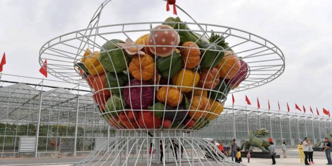 Нови велики пројекат Кинеза у Србији могао би да реши и муку малинара, воћара и повртара 1