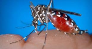 КАД ГОВНА ПЛУТАЈУ ГРАДОМ! На 21 локацији у Београду нађени заражени комарци 8
