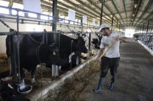 НЕЗАДОВОЉНИ РАДНИЦИ ПКБ-a: Траже 6.150 евра по хектару