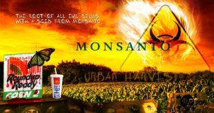 Пресуда која мења све: Дрма се токсична ГМО пирамида у свету 11