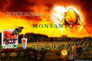 Пресуда која мења све: Дрма се токсична ГМО пирамида у свету