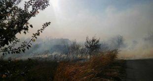 Код Зрењанина гори 800 хектара шума, њива и резерват Царска Бара (видео) 4