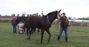 Шабац: Ревијалне коњике трке (видео) 9