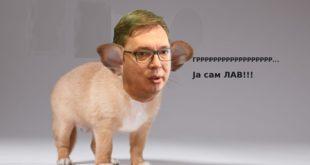 МИХАИЛО МЕДЕНИЦА: Не требају нам лавови већ људи, Александре Вучићу! 8