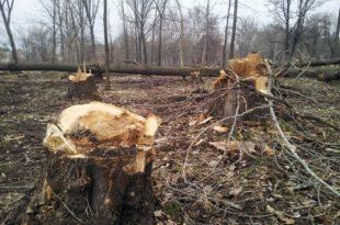 Вучићева дебилска власт није у стању да сачува мало шуме код Куршумлије од шиптарских лопова