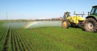 И најздравији кељ затрован пестицидима 9
