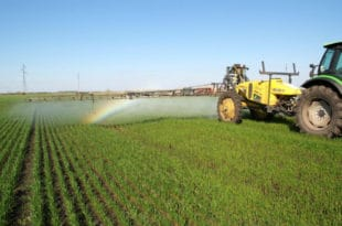И најздравији кељ затрован пестицидима 7