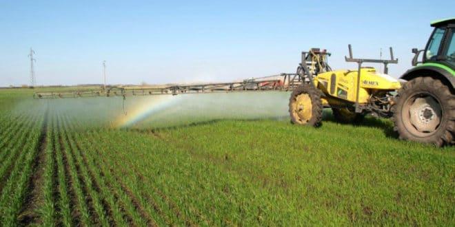 И најздравији кељ затрован пестицидима 1