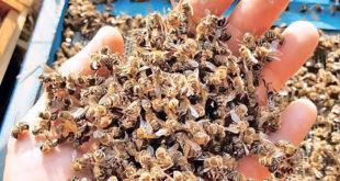 Почињу контроле засада да се утврди ко убија пчеле, тражи се помоћ грађана и МУП-а 11