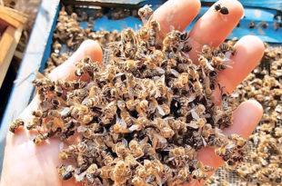 Почињу контроле засада да се утврди ко убија пчеле, тражи се помоћ грађана и МУП-а 3