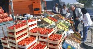 СРПСКА САЛАТА ИЗ АЛБАНИЈЕ: Наша земља све више увози свеже поврће са свих континената, али највише из комшилука 6