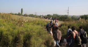 У Србији дневно улази преко 100 миграната 13