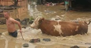 Kраљево поплављено за неколико сати, мештани кажу - катализма, уништене куће (видео) 9