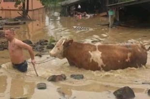 Kраљево поплављено за неколико сати, мештани кажу - катализма, уништене куће (видео) 7