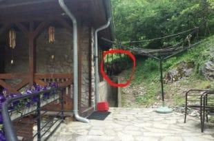 Медведи у посети Светим Архангелима код Призрена (видео)